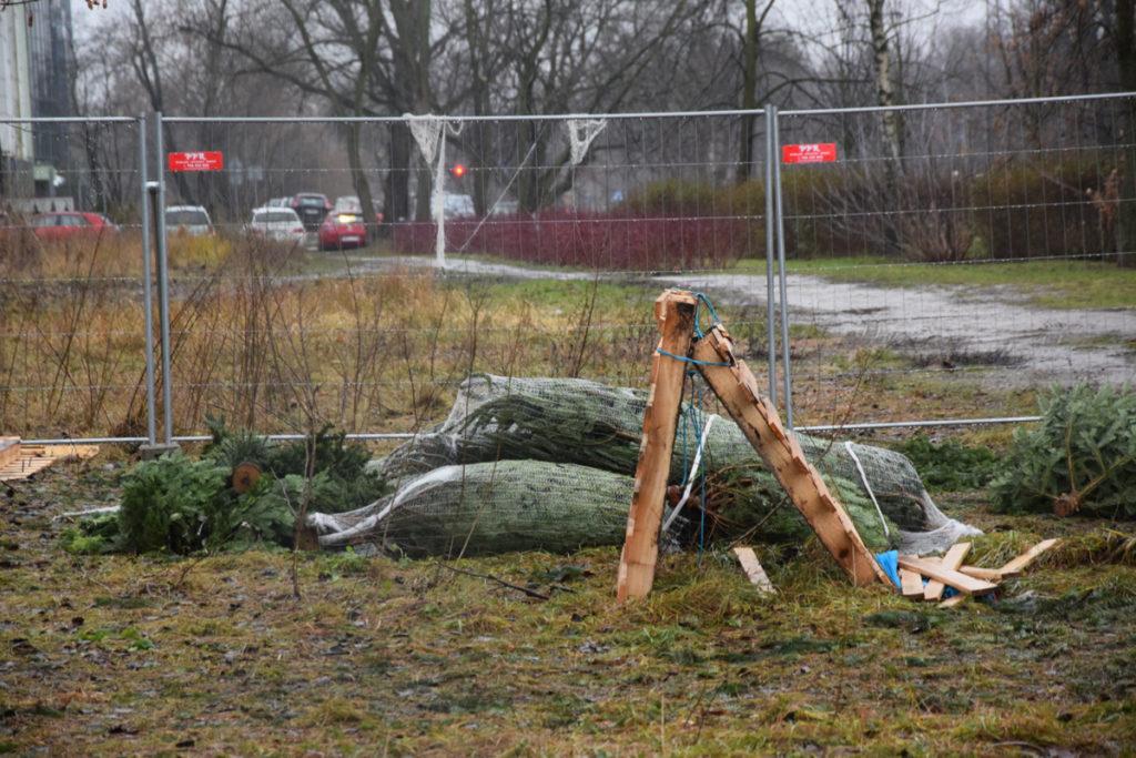 Poświąteczny krajobraz na ul. Przanyskiej. Choinki pozostawione na stoisku przy skrzyżowaniu z ul. Krasińskiego